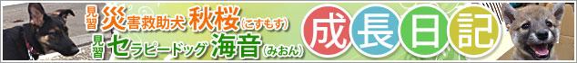 見習い災害救助犬秋桜(コスモス)と見習いセラピードッグ海音(みおん)の成長日記バナー