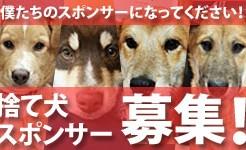捨て犬スポンサー募集バナー