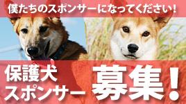 殺処分保護犬「龍馬(りょうま)」について