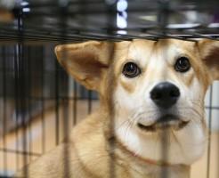 動物福祉・動物保護