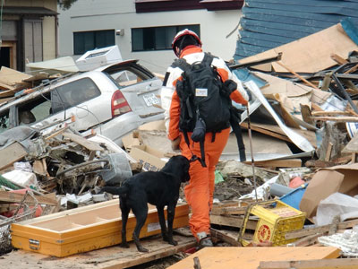 Disaster Search Dog Training and Deployment