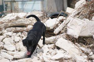 災害救助犬の育成および派遣の重要性