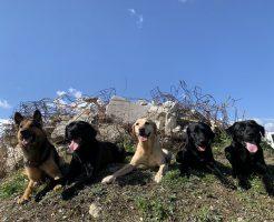 佐賀県内で「セラピードッグ」と「災害救助犬」の育成と活動を実現したい!