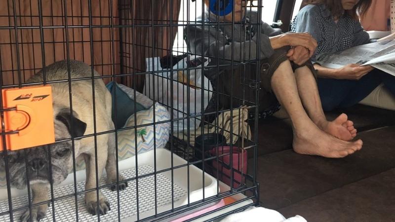 被災ペットと一緒に身を寄せる家族