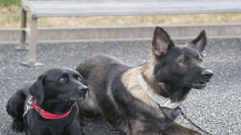 待機中の災害救助犬「J」「金蔵」