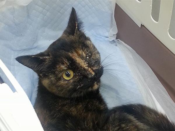 収容された犬や猫たちへの医療支援
