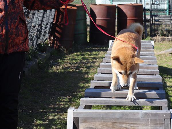 救助犬育成コース